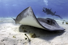 Stingray City(Grand Cayman)