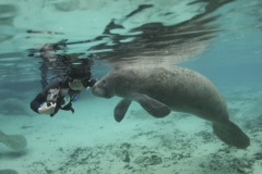 Manatee Shooting - Florida