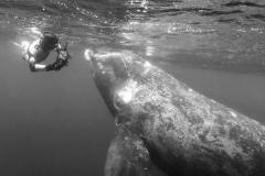 Begegnungen mit Walen sind aüßerst beeindruckende Erlebnisse, die mich zutiefst bewegen und berühren. Bei solchen Nahbegegnungen findet immer eine Kommunikation zwischen Wal und Mensch statt. Photos&Copyright by Kerstin Meyer