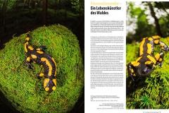NATURBLICK – Feuersalamander