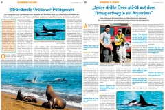 ORCAS Patagonien & Dr. Ingrid Visser