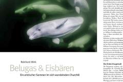 NATURFOTO: Bericht über Churchill & die aktuelle Bedrohung der dortigen Beluga-Population