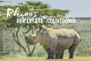Afrika - Nashorn Wilderei