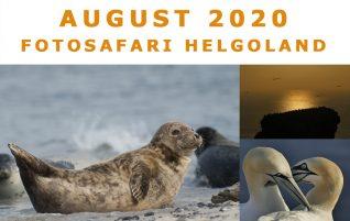 Workshop Helgoland
