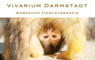 Workshop Vivarium