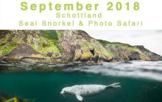 Fotosafari Seals