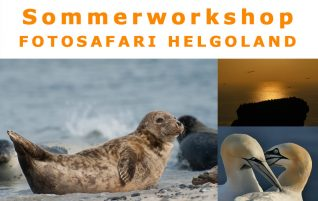 Workshop Helgoland