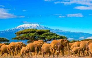 Magic Kenia Reise mit Wirodive im Februar